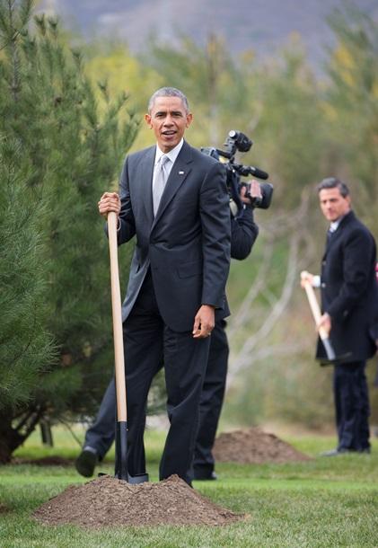 Обама и Путин в Пекине усаживали ели (ФОТО)