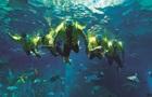 В Дубае откроется первый в мире магазин под водой
