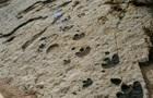 В Канаде нашли тропу динозавров возрастом более 100 миллионов лет
