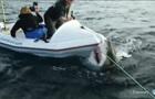 На межі. Шестиметрова акула ледь не потопила знімальну групу Discovery