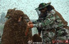 55-летний китаец посадил на себя миллион пчел