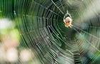 Ученые: пауки могут пересекать водоемы словно парусники