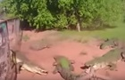 Атаку крокодила на рептилию засняли на видео