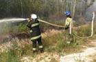 Под Киевом горят 19 гектаров хвойного леса