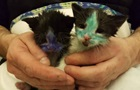 У Англії знайшли кошенят, пофарбованих маркером