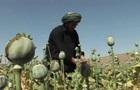 ООН: Виробництво опіуму в Афганістані може різко зрости