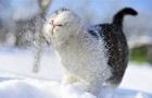 Перший сніг у Києві чекатимуть уже в середу