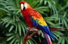 У Кувейті папуга розбовтав дружині про зраду чоловіка