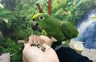 У Сибіру знайшли давнього папугу