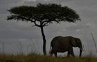 За последние 40 лет в мире стало на 60% меньше животных