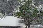 Негода в Криму: вітер валить дерева