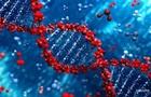 Розумні люди приречені на вимирання - генетики