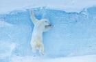 На мировом конкурсе выбрали самые яркие фото природы