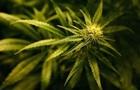У Нідерландах підтримали легалізацію вирощування марихуани