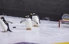 Пингвины навестили Питтсбург во время матча НХЛ