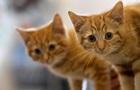 В Киеве запретят ловить бездомных кошек