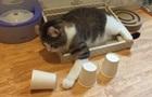 Мережу здивував розумний кіт, який розгадав фокус з кулькою