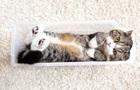 Эксперты назвали самого популярного в мире кота