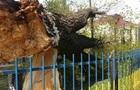 У Вінниці на уроці фізкультури впало дерево, є постраждалі