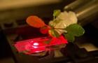 Учені створили штучну форму фотосинтезу
