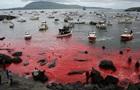 На Фарерських островах почався масовий забій китів