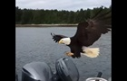 Хитрый орел украл улов у рыбака из-под носа
