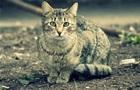 Рада посилила покарання за жорстокість до тварин