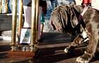 У Каліфорнії обрали найбільш некрасиву собаку