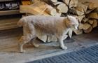Скончался кот-мэр города на Аляске