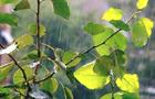 На українців чекають дощові вихідні
