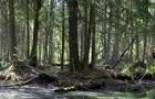 Суд ЕС запретил Польше рубить лес в Беловежской пуще