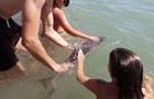 Туристы до смерти замучили дельфиненка за 15 минут