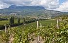 Из-за схода селей в Крыму пострадали виноградники Массандры