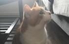 Аномально великі пальці кота здивували Мережу