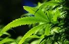 Ученые связали марихуану с насилием