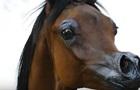 В США вывели лошадь, как в мультике Disney