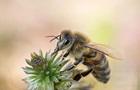 В Германии резко исчезают насекомые – ученые