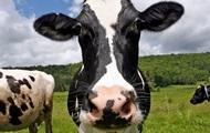 Полиция Калифорнии поймала похитителя костюмов коров