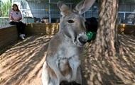 Полиция Техаса провела операцию по поимке кенгуру-беглеца