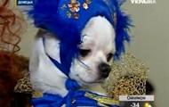 В Донецке прошел праздничный карнавал для собак