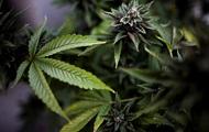 В Колорадо и Вашингтоне легализуют марихуану