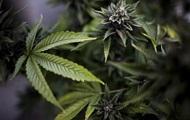 В Чехии будут выращивать легальную марихуану