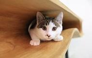 Как занять кота, не отвлекаясь от важной работы