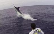 Рыбак из Дании поймал синего марлина весом в полтонны