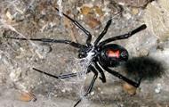 В заброшенном ирландском доме обнаружили более 100 ядовитых пауков