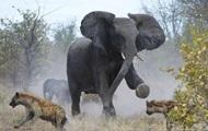 За 40 років диких тварин на Землі стало вдвічі менше