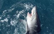 Британец поймал на крючок 180-килограммовую акулу