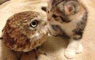 Дружба кошеняти і сови стала хітом соцмереж