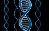 Ученые рассказали о влиянии генов на политические убеждения человека