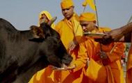 Глава партии в Индии сделал выговор коллегам из-за коров